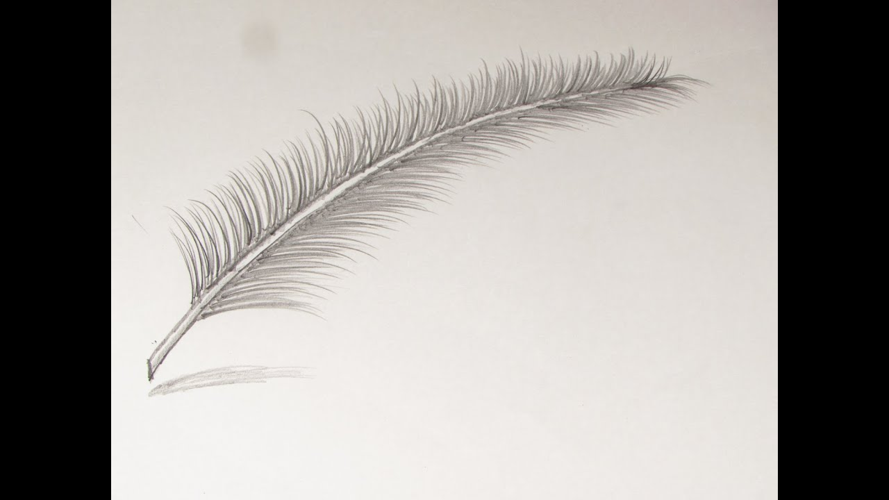Line Drawing Feather : How to draw or sketch a feather pankh youtube