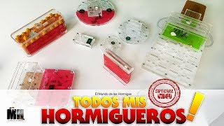 TODOS MIS HORMIGUEROS  | ESPECIAL TODAS LAS COLONIAS