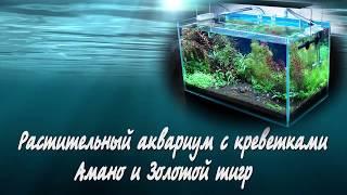 Растительный аквариум с креветками Амано и Золотой тигр