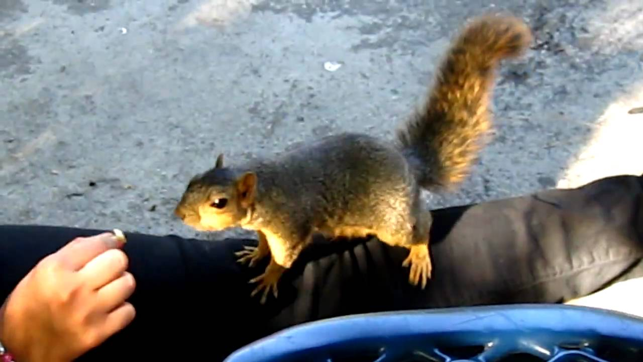 squirrel with rabies - YouTube