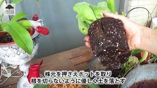 園芸家の杉井志織さんが、草姿が特徴的な様々な食虫植物を紹介します。...