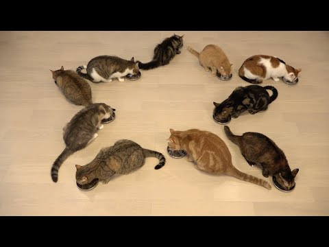 10 Cats Eat  Family Meals Together Every Day☆毎日一緒に食べる10匹の猫