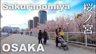 Osaka, Walking around Sakuranomiya (桜ノ宮) and Taiko-en (太閤園) - Cherry Blossoms in Full Bloom [4K] POV