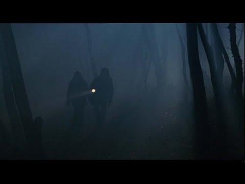 """Результат пошуку зображень за запитом """"пошуки у нічному лісі"""""""