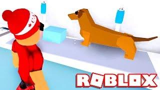I cured SICK ANIMALS in the ROBLOX VET SIMULATOR 🐶 → Vet Simulator 🎮