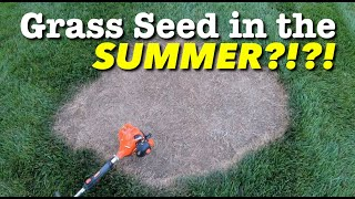 Grass Seed - Planting Grass Seed at The WRONG Time