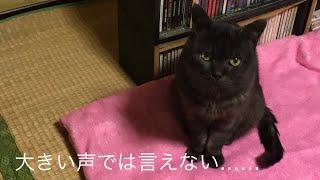 しゃべる猫 #猫トイレ #黒猫.