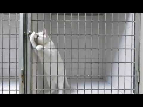 Super Intelligent Cats - Funny Cats