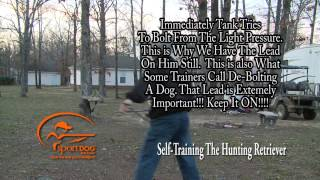 Vid 7 Collar Conditioning To Place & Here While Whistle Training