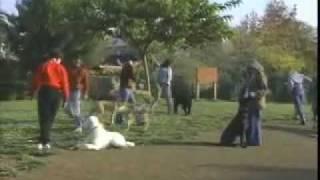 Fun & Games - Sirius Puppy Training Classic
