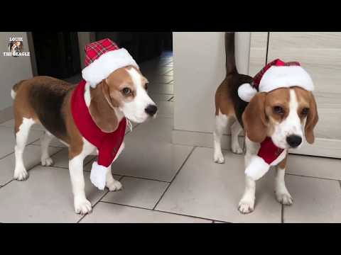 The Best Present For A Dog On Christmas : 40 brand new toys!