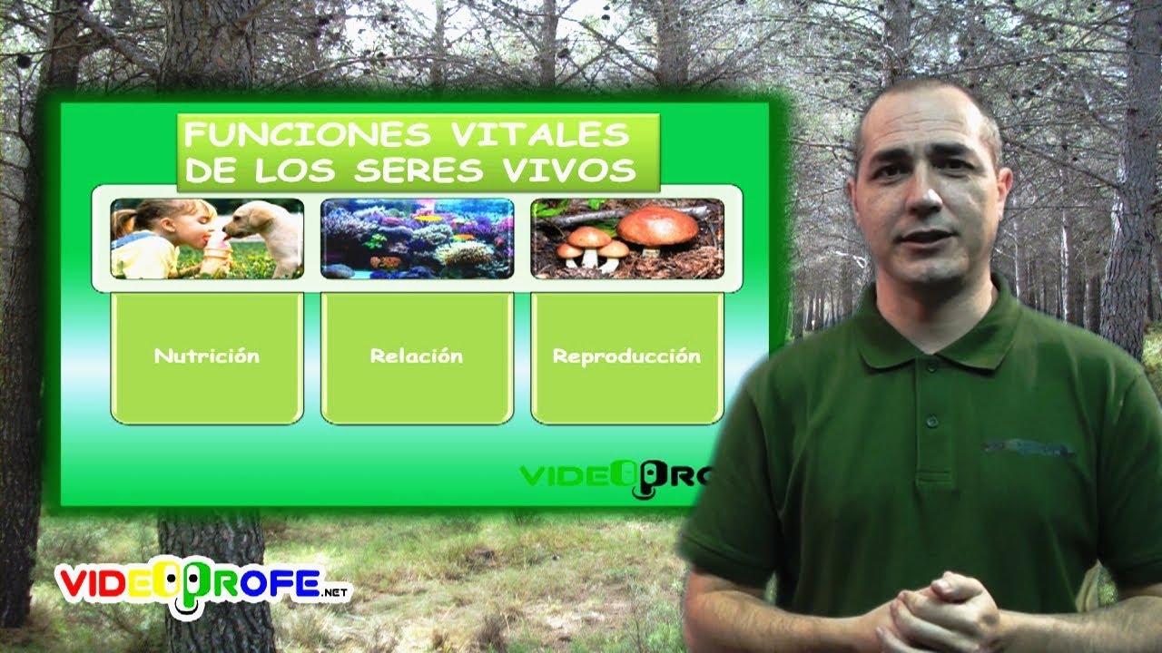 03 Las Funciones Vitales De Los Seres Vivos 3º Conocimiento Del Medio Videoprofe Net Youtube
