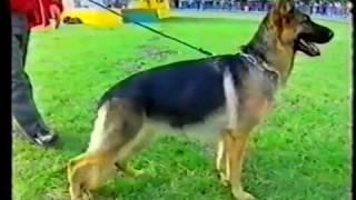 ВЫСТАВКА НЕМЕЦКИХ ОВЧАРОК в Германии 1995 / часть 7 РАБОТА РИНГОВ