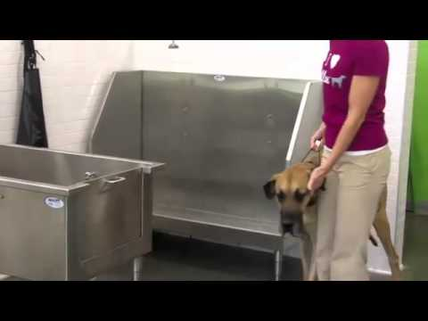 Ollu dog wash intro youtube solutioingenieria Image collections