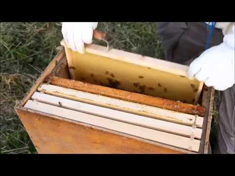 Вопрос: Что делают пчелы, если летом вдруг пошел дождь?