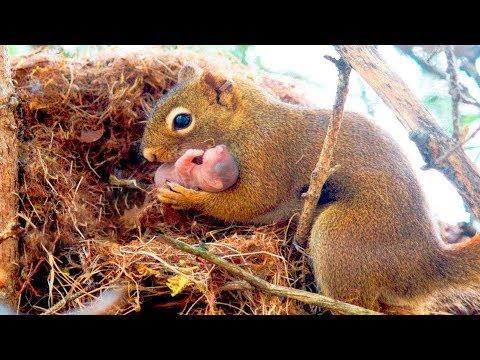 Eichhrnchen klammert sich um Hilfe bittend an einen Mann, weil ihr Junges in Schwierigkeiten ist