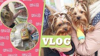 VLOG: собаки,поход в зоо,покупки,новая одежда для Юси,йоркширские терьеры Маркусс и Юстина.