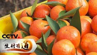 《生财有道》 20200103 广西鹿寨:生态山林湖 条条生财路| CCTV财经