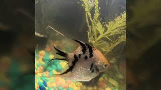 Нарезка фото аквариумных рыбок за 16.12.18