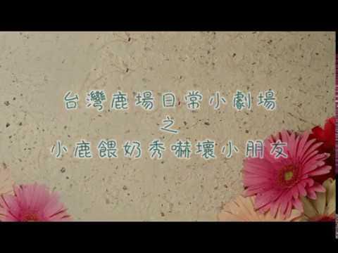 台灣鹿日常小劇場-小鹿餵奶秀