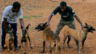 A visit to Todo Perro Kennel | All about the Belgian Malinois