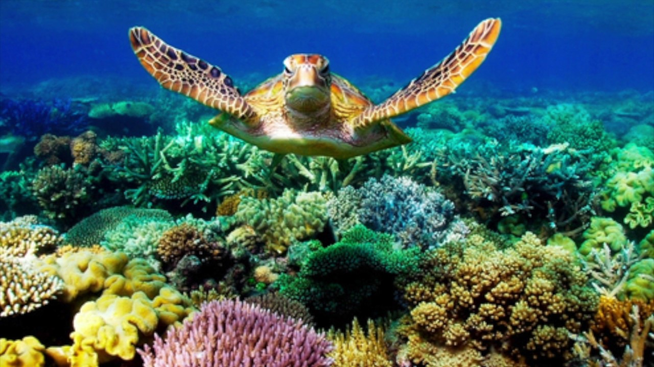 Essay on coral reef destruction