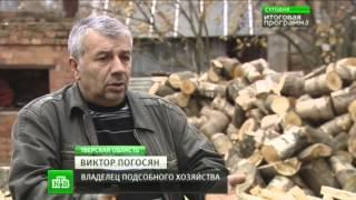 Страшная болезнь косит свиней по всей России