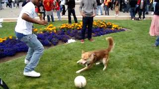 #Q FIFA 2018 RUSSIA World Cup... Soccer with a Dog