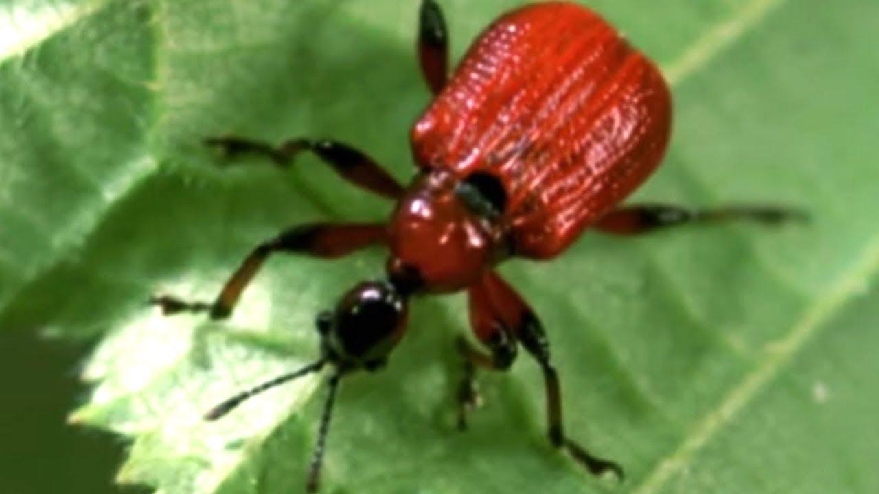 Facts About Animals - Secret Nature