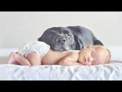 Lustige Hunde - Beste Tier Babysitter für Babys Compilation 2014
