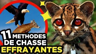 11 CHASSES ANIMALES les plus EFFRAYANTES