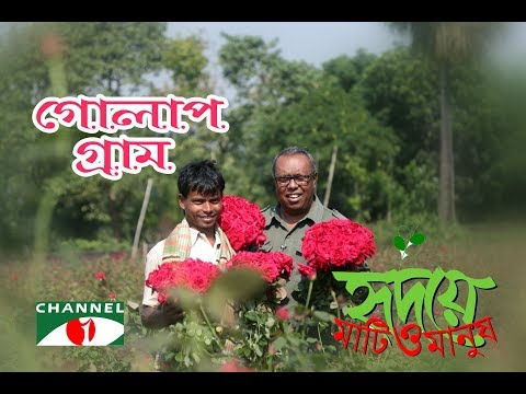 গোলাপগ্রাম | Shykh Seraj | HD | Channel i | The Village of Rose |