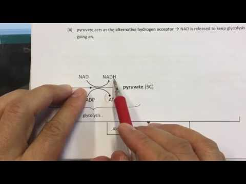 Lo Sir Teaching DSE Respiration (4) ~ Anaerobic Respiration