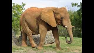 Dyrene i Afrika - Musikk og bilder!
