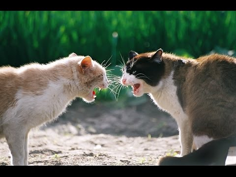 Crazy FIGHTING Cats (30min.)