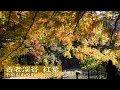 養老渓谷 紅葉 (中瀬遊歩道・金神の滝ほか)2017年11月29日 千葉県市原市・大多喜町