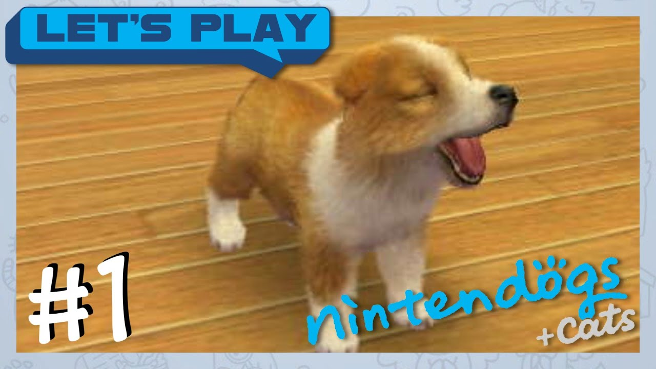 """French Bulldog: #1 """"INIZIAMO!"""" [ITA"""