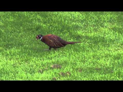 Loch Ness & Scotland   A Very Fast Tour HD