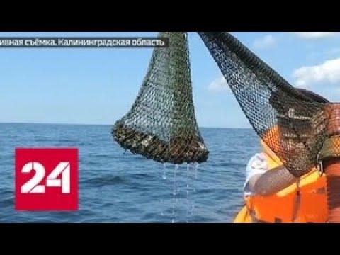 """Выбраться удается не всем: как рискуют """"янтарные кроты"""" - Россия 24"""