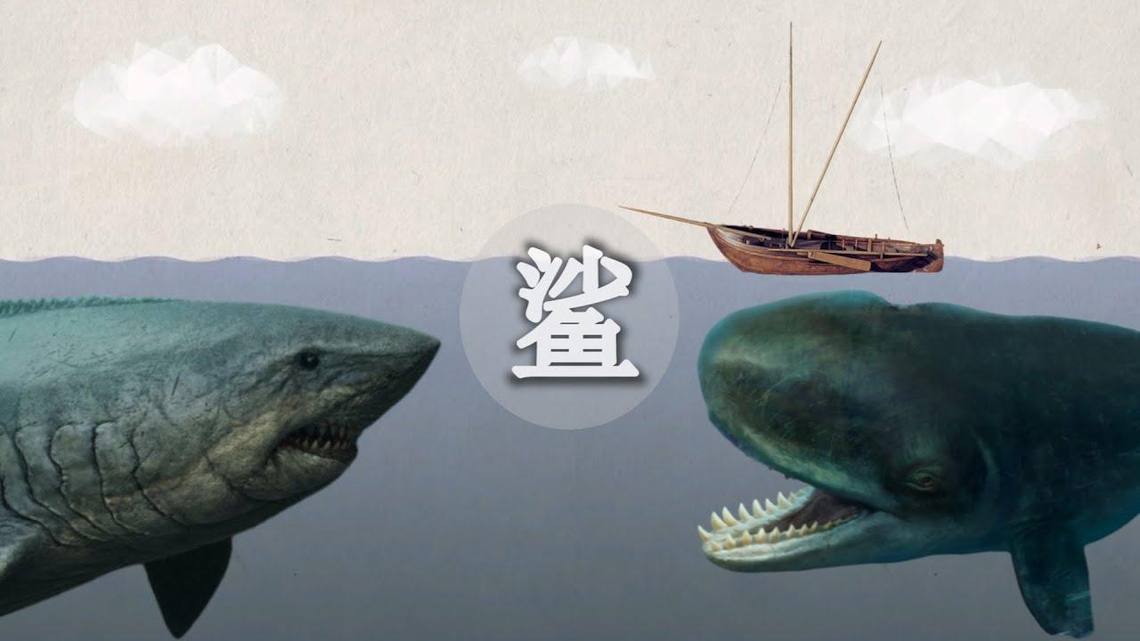 """人類發現的""""史前巨鯊""""到底有多兇猛?""""巨齒鯊""""的對手是竟然是""""鯨""""   科學時光機 - YouTube"""