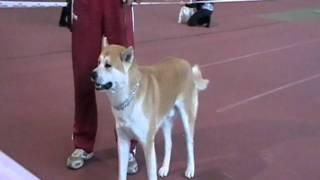 Выставка собак в Донецке 2010 11 06 113809