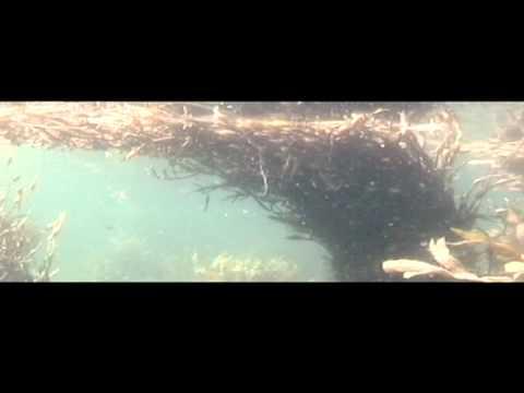 Algea - Diving in Arctic waters