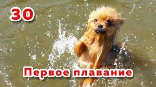 🐾 Шпицы не умеют плавать? 👀 Кемерово, Томь