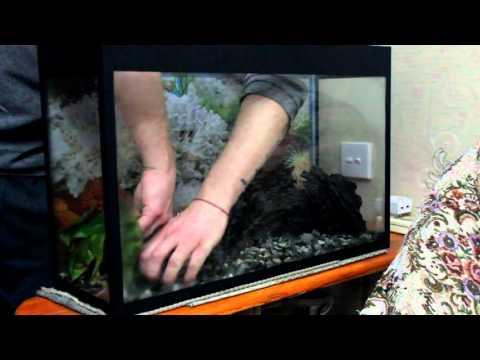 Запуск моего нового аквариума