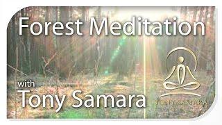 Tony Samara's 'Forest Meditation' - TonySamara.com