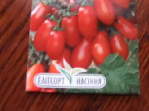 Представление нового сорта помидор СКАЗКА