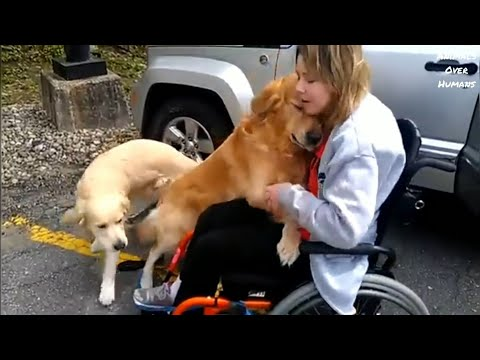 Emotional Dog Reunion with their owners|I'm cutting onions😢