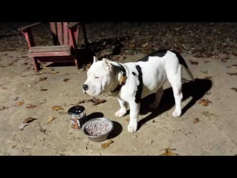 Bully Max pitbull supplement results
