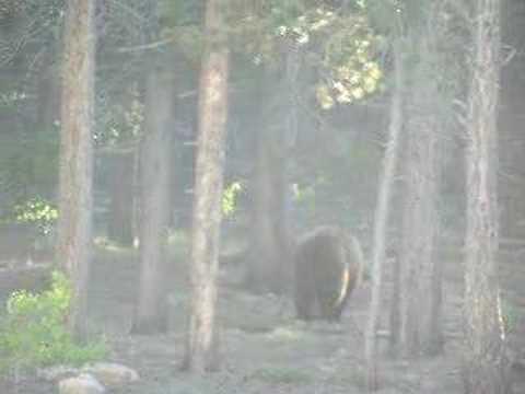 St. Malo Bear Visit