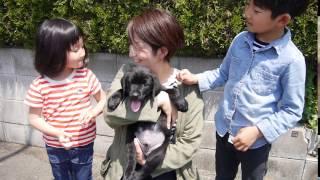 2017年3月1日生まれのポラリスの子犬は、福岡県の西山さんの家族に迎え...